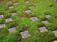 Декоративный мох для сада — 82 фото применения и сочетания с камнем