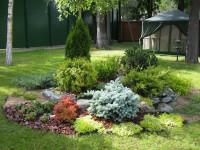 Хвойные композиции в ландшафтном дизайне — фото грамотного обустройства вечнозеленых растений