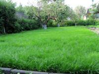 Устройство газона: виды, процесс укладки и ухода за ним + фото