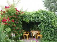 Вертикальное озеленение на даче — 77 фото удивительно красивой зеленой архитектуры