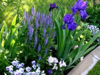 Весенний цветник — руководство по подбору растений + 67 фото