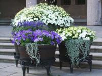 Выращивание цветов в контейнерах — фото для начинающих домовладельцев