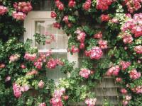 Вьющиеся растения для вертикального озеленения сада — инновационные решения для небольших садов + 80 фото