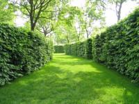 Живая изгородь на дачном участке — 79 фото удачного и совершенно правильного выбора