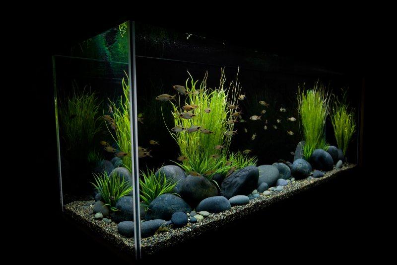 Akvariumyi v interere 12