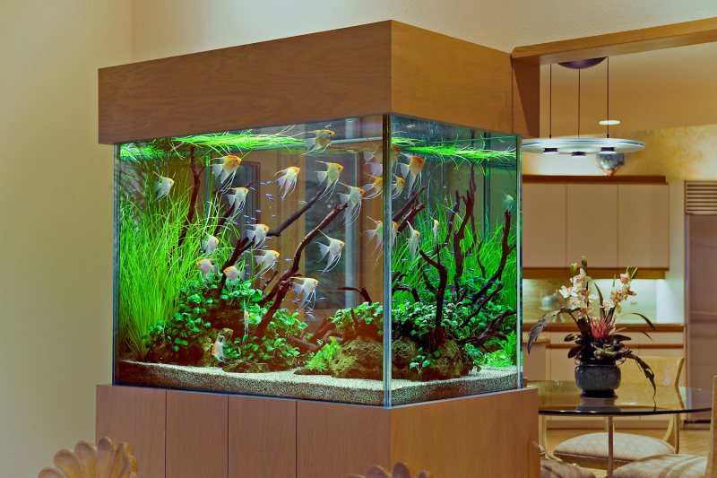 Akvariumyi v interere 15