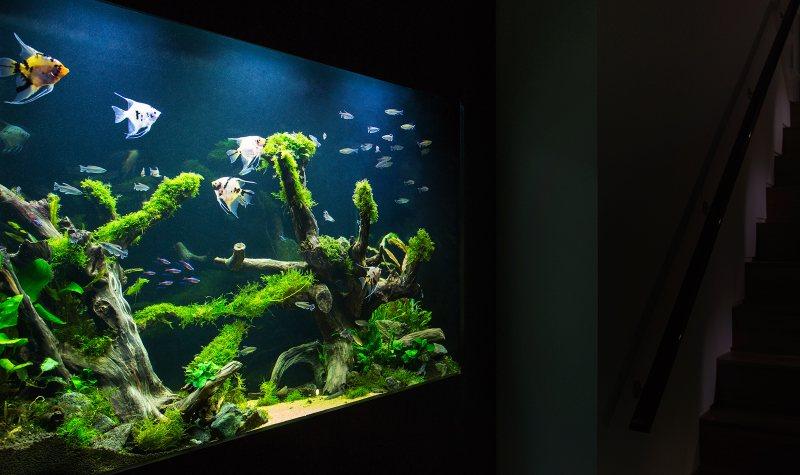 Akvariumyi v interere 19