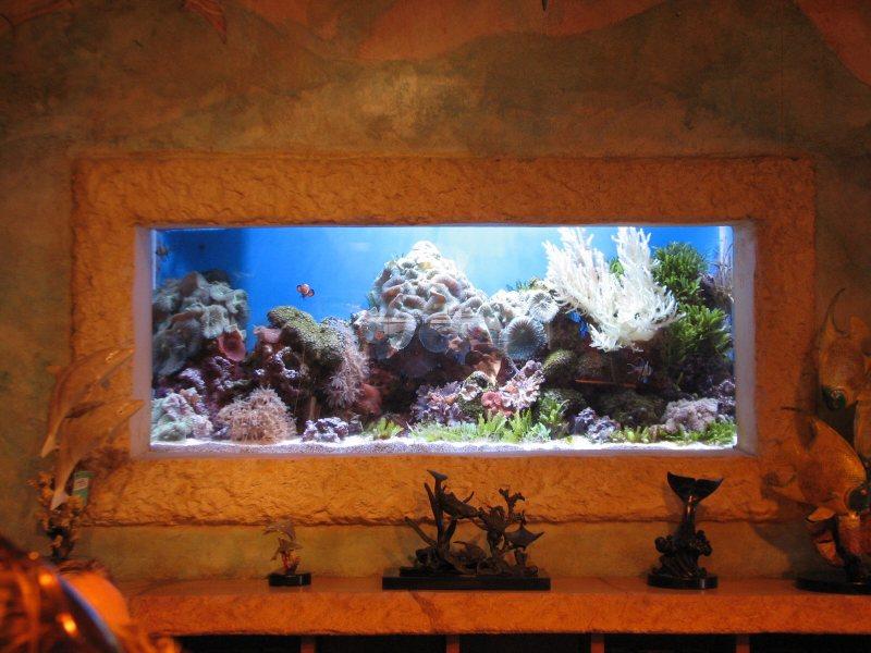 Akvariumyi v interere 34