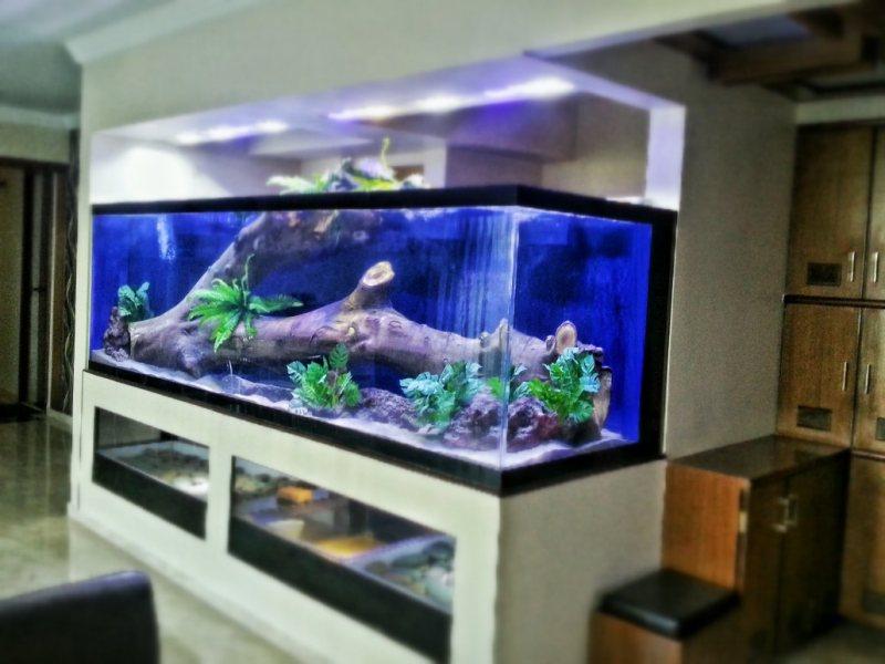 Akvariumyi v interere 55