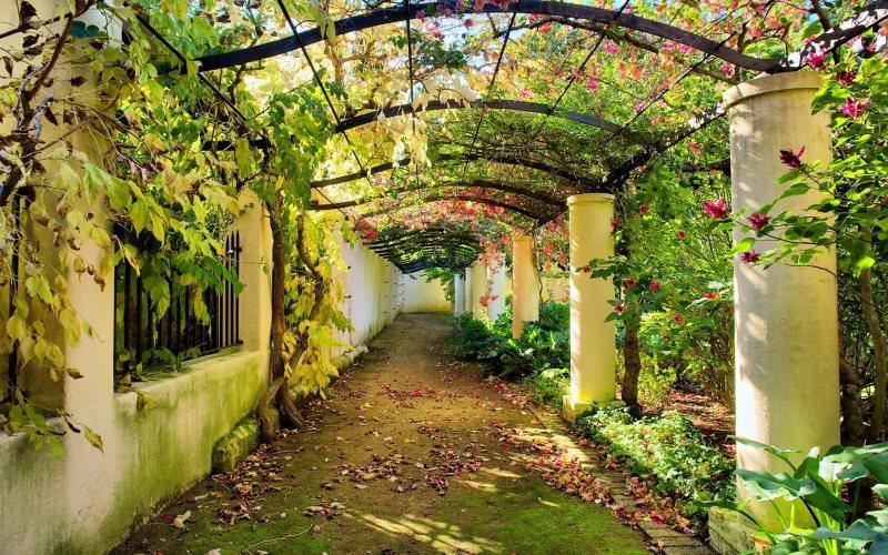 Arch in the garden 10