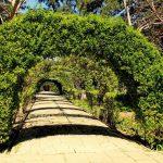 Arch in the garden 14