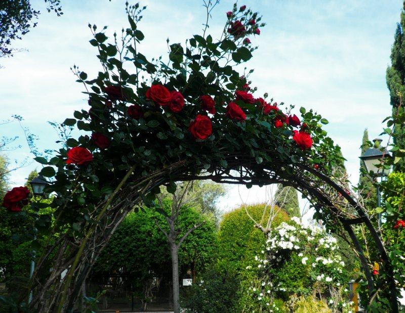 Arch in the garden 15