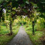 Arch in the garden 2