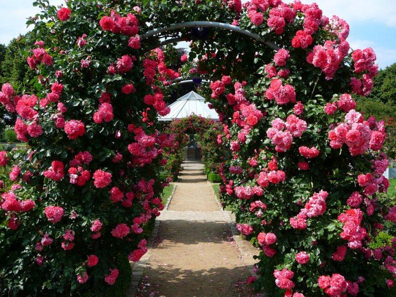 Arch in the garden 21