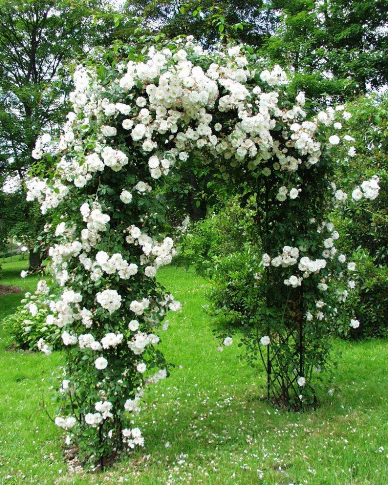 Arch in the garden 22