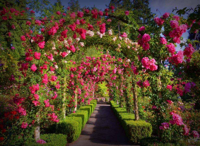 Arch in the garden 3