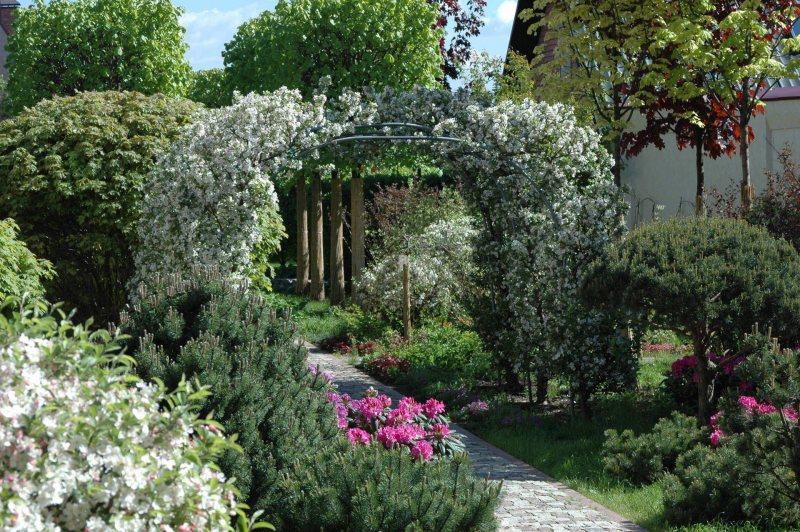 Arch in the garden 6