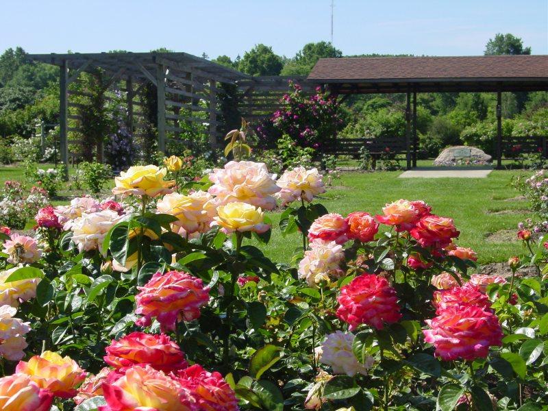 Цветники на дачном участке