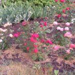 TSvetniki na dachnom uchastke 3 4