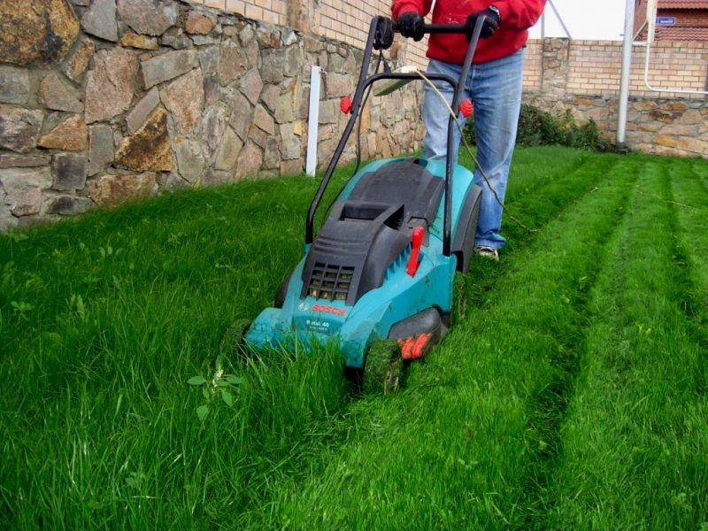 Уход за газоном в домашних условиях