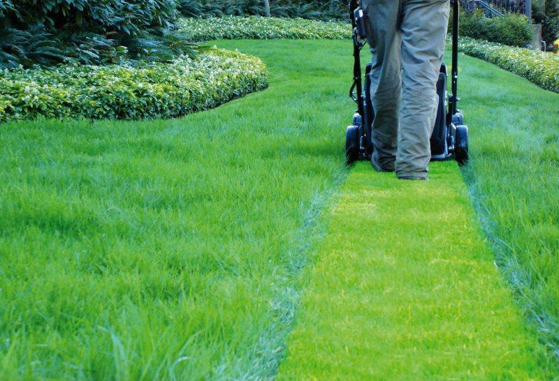 Устройство газона - фото оборудования и необходимых материал