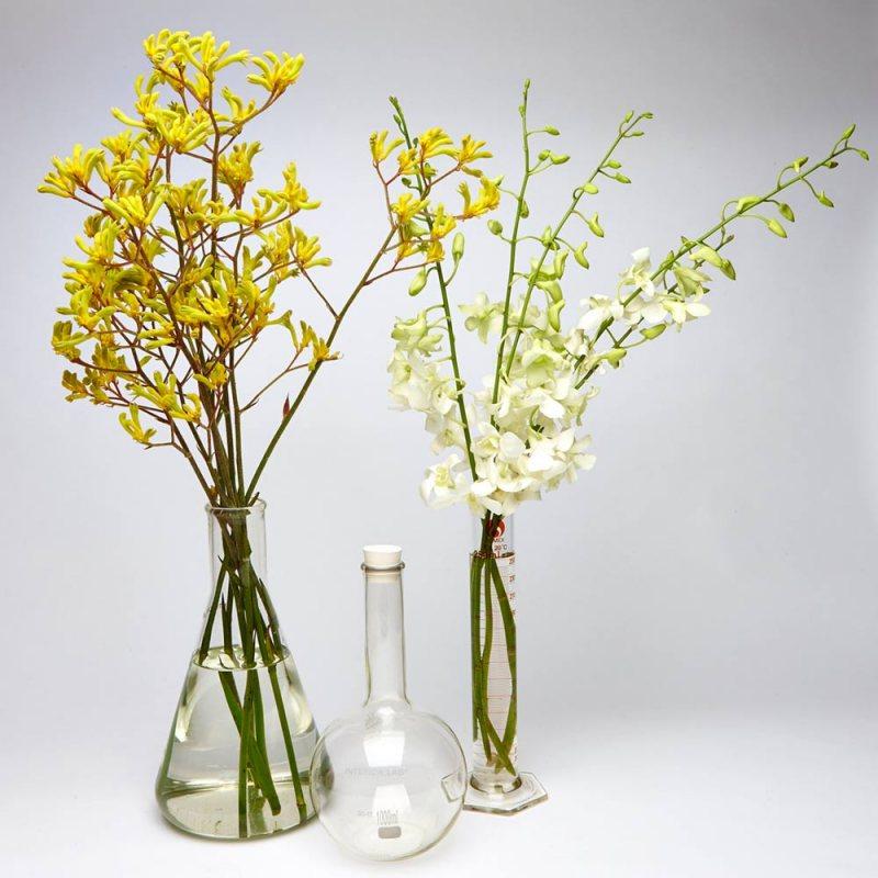 Vazyi v interere 13